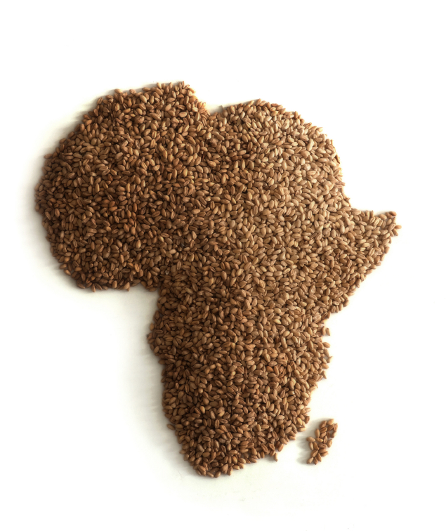 The seeds to Africa growth